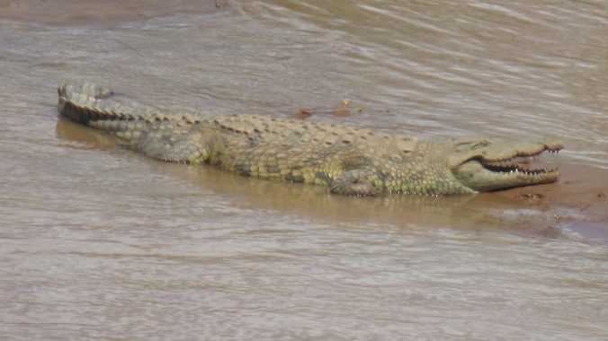 Bruce, the resident croc.