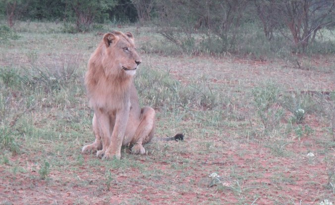 Ten minutes into our first game drive we saw this guy.