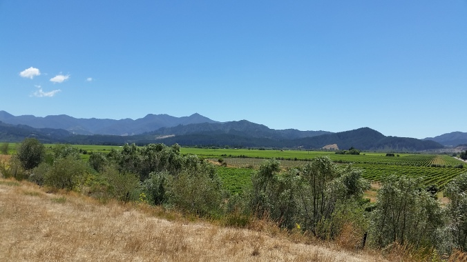 Vineyards in Marlborough.